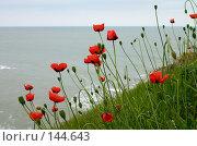 Купить «Дикие маки», фото № 144643, снято 5 мая 2006 г. (c) Максим Горпенюк / Фотобанк Лори