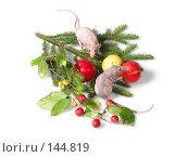 Купить «Пара крыс на ветке ёлки», фото № 144819, снято 23 сентября 2007 г. (c) Иван / Фотобанк Лори