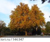 Купить «Китай. Клен в парке», фото № 144947, снято 15 ноября 2007 г. (c) Александр Солдатенко / Фотобанк Лори