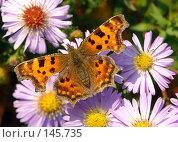 Купить «Бабочка», фото № 145735, снято 15 августа 2018 г. (c) Константин Порядин / Фотобанк Лори