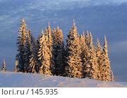 Зимние ели. Стоковое фото, фотограф Герман Филатов / Фотобанк Лори