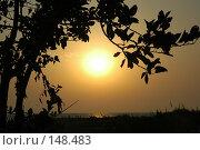 Купить «Магнолия на закате», фото № 148483, снято 5 сентября 2007 г. (c) Максим Яковлев / Фотобанк Лори