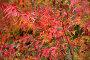Осенняя листва, фото № 151555, снято 19 сентября 2017 г. (c) Кирилл Николаев / Фотобанк Лори
