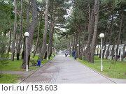 Аллея между деревьев с фонарями, г. Геленджик. Стоковое фото, фотограф BART / Фотобанк Лори