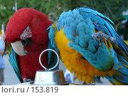 Купить «Два попугая на клетке», фото № 153819, снято 9 сентября 2007 г. (c) Иван Мацкевич / Фотобанк Лори