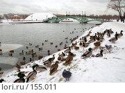 Купить «Утки», фото № 155011, снято 16 декабря 2007 г. (c) Сергей Лаврентьев / Фотобанк Лори