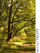 """Купить «Дерево, растущее на краю леса. Особо охраняемая природная территория """"Битцевский лес""""», фото № 155679, снято 4 сентября 2007 г. (c) Петухов Геннадий / Фотобанк Лори"""