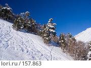 Купить «Заснеженные деревья на склоне Чегета», фото № 157863, снято 15 декабря 2007 г. (c) Борис Панасюк / Фотобанк Лори