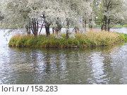 Купить «Маленький островок с деревьями на   Большом пруду. Царское село. Санкт- Петербург», эксклюзивное фото № 158283, снято 16 сентября 2007 г. (c) Ирина Мойсеева / Фотобанк Лори