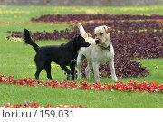 Купить «Две собаки», фото № 159031, снято 26 мая 2006 г. (c) Морозова Татьяна / Фотобанк Лори