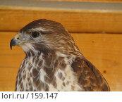 Купить «Хищник», фото № 159147, снято 27 октября 2007 г. (c) Карелин Д.А. / Фотобанк Лори