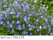 Купить «Полевые цветы», фото № 159279, снято 15 июня 2006 г. (c) Морозова Татьяна / Фотобанк Лори