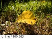 Осенний лист. Стоковое фото, фотограф Розе Андрей / Фотобанк Лори