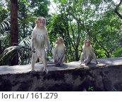 Купить «Любопытство», фото № 161279, снято 14 ноября 2004 г. (c) Марина Бандуркина / Фотобанк Лори