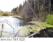 Купить «Болото в лесу», фото № 161523, снято 30 сентября 2007 г. (c) Бяков Вячеслав / Фотобанк Лори