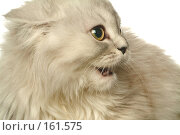 Купить «Кошка», фото № 161575, снято 19 февраля 2018 г. (c) Морозова Татьяна / Фотобанк Лори