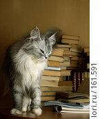 Купить «Библиофил», фото № 161591, снято 11 мая 2007 г. (c) Морозова Татьяна / Фотобанк Лори