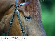 Купить «Портрет лошади», фото № 161635, снято 12 августа 2006 г. (c) Морозова Татьяна / Фотобанк Лори