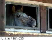 Купить «Лошадь в укрытии», фото № 161655, снято 9 июля 2005 г. (c) Морозова Татьяна / Фотобанк Лори