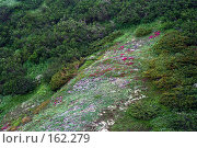 Купить «Флора Камчатки. Фон.», фото № 162279, снято 26 июня 2007 г. (c) Николай Коржов / Фотобанк Лори