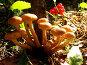 Весёлая семейка, фото № 162471, снято 28 августа 2007 г. (c) Кондратьев Игорь Витальевич / Фотобанк Лори
