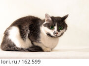 Купить «Кошка», фото № 162599, снято 18 февраля 2005 г. (c) Морозова Татьяна / Фотобанк Лори