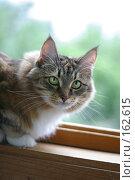 Купить «Кошка», фото № 162615, снято 12 августа 2006 г. (c) Морозова Татьяна / Фотобанк Лори
