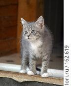 Купить «Внимательный котенок», фото № 162619, снято 1 сентября 2004 г. (c) Морозова Татьяна / Фотобанк Лори