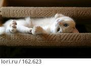 Купить «Кот», фото № 162623, снято 15 января 2006 г. (c) Морозова Татьяна / Фотобанк Лори