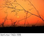 Купить «Луна и осень», фото № 163199, снято 4 ноября 2006 г. (c) Кондратьев Игорь Витальевич / Фотобанк Лори