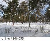 Лес зимой. Стоковое фото, фотограф Андреева Анастасия / Фотобанк Лори