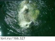 Купить «Плывущий белый медведь», фото № 166327, снято 11 июня 2007 г. (c) Светлана Архи / Фотобанк Лори