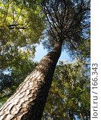 Купить «Дерево», фото № 166343, снято 22 сентября 2007 г. (c) Алембатров Алексей / Фотобанк Лори