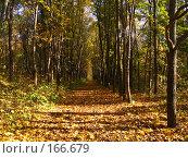 Купить «Осень», фото № 166679, снято 8 октября 2006 г. (c) Карелин Д.А. / Фотобанк Лори