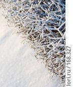 Купить «Заснеженные, заледеневшие ветви кустарника на фоне снега. Красивый фон», фото № 168327, снято 8 января 2008 г. (c) Светлана Силецкая / Фотобанк Лори