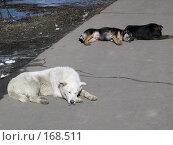 Купить «Дворняги», фото № 168511, снято 5 апреля 2003 г. (c) Сергей Лаврентьев / Фотобанк Лори