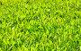 Зеленая трава, фото № 168967, снято 6 мая 2007 г. (c) chaoss / Фотобанк Лори