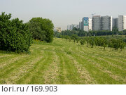 Купить «Выкошенный газон», фото № 169903, снято 29 мая 2007 г. (c) Петухов Геннадий / Фотобанк Лори