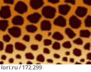 Купить «Текстура - шкура леопарда», иллюстрация № 172299 (c) Лукиянова Наталья / Фотобанк Лори