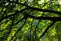 Листва, подсвеченная утренним солнцем, фото № 173435, снято 26 мая 2007 г. (c) Петухов Геннадий / Фотобанк Лори