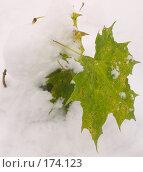 Купить «Первый снег», фото № 174123, снято 13 ноября 2018 г. (c) Елена Каминер / Фотобанк Лори