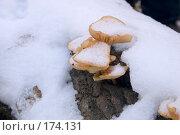 Купить «Под снегом», фото № 174131, снято 13 ноября 2018 г. (c) Елена Каминер / Фотобанк Лори