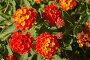Красные цветы, фото № 174427, снято 21 июня 2007 г. (c) Брыков Дмитрий / Фотобанк Лори