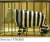 """Купить «Кабан """"Убийца мясника""""», фото № 174803, снято 6 января 2008 г. (c) Татьяна Высоцких / Фотобанк Лори"""