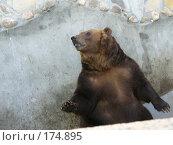 Купить «Медвежьи посиделки», фото № 174895, снято 23 сентября 2006 г. (c) Наталья Ярошенко / Фотобанк Лори