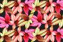 Разноцветные листья, фото № 175415, снято 11 января 2008 г. (c) Parmenov Pavel / Фотобанк Лори