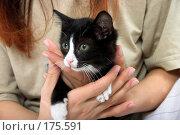 Купить «Черно-белый котенок на руках», фото № 175591, снято 21 сентября 2018 г. (c) Ольга С. / Фотобанк Лори