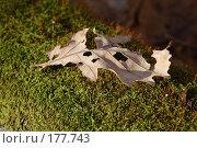 Купить «Лист дуба на мху», фото № 177743, снято 23 сентября 2018 г. (c) Антон Тарасов / Фотобанк Лори