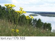 Купить «Жёлтый цветок на фоне холмов и Оки», фото № 179103, снято 12 декабря 2004 г. (c) Дмитрий Глебов / Фотобанк Лори