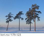 Купить «Сосны зимой», фото № 179123, снято 25 декабря 2004 г. (c) Юлия Подгорная / Фотобанк Лори